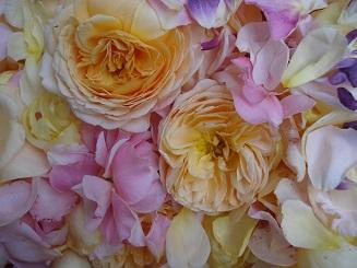 Rosenblüten für Hausapotheke und Küche