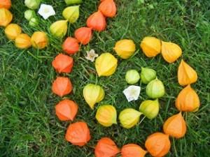Physalis-(Lampionblumen)Landart
